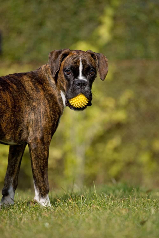 Ballspielen Grundkommando Aus