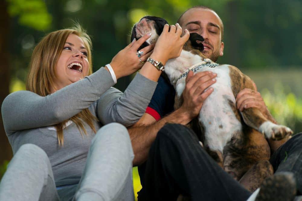 Deutscher Boxer mit jungem Paar