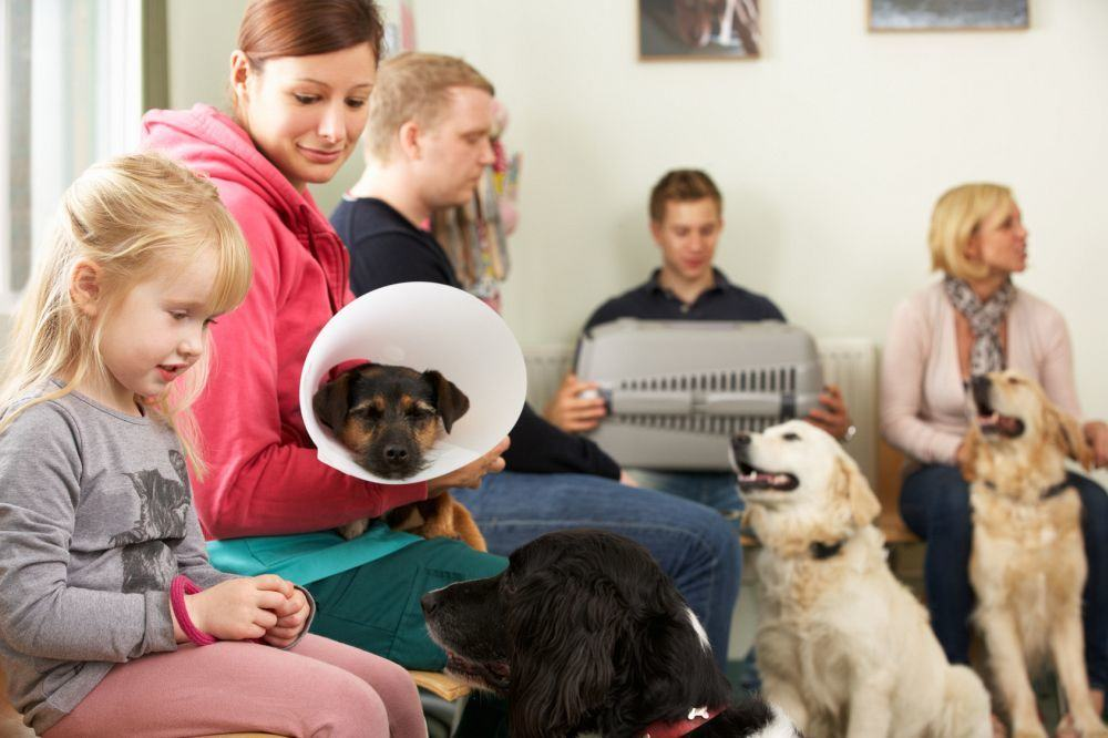 Warteraum Tierarzt