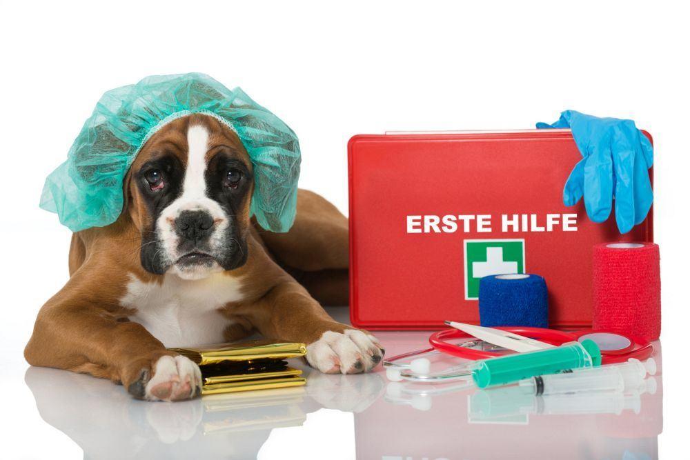 Erste Hilfe Deutscher Boxer