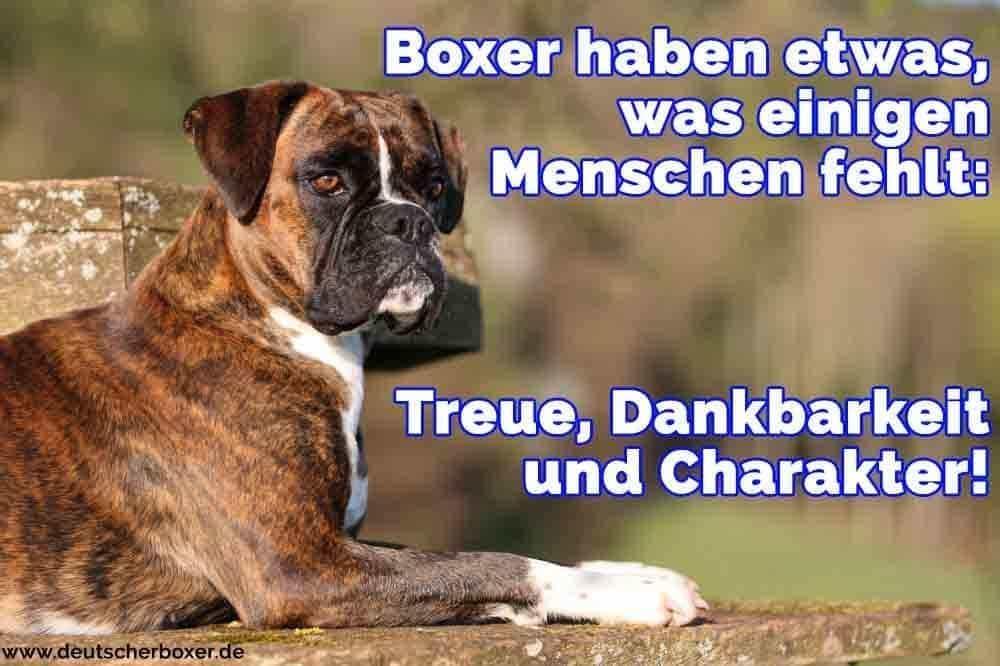 Ein Boxer auf dem Stein liegt