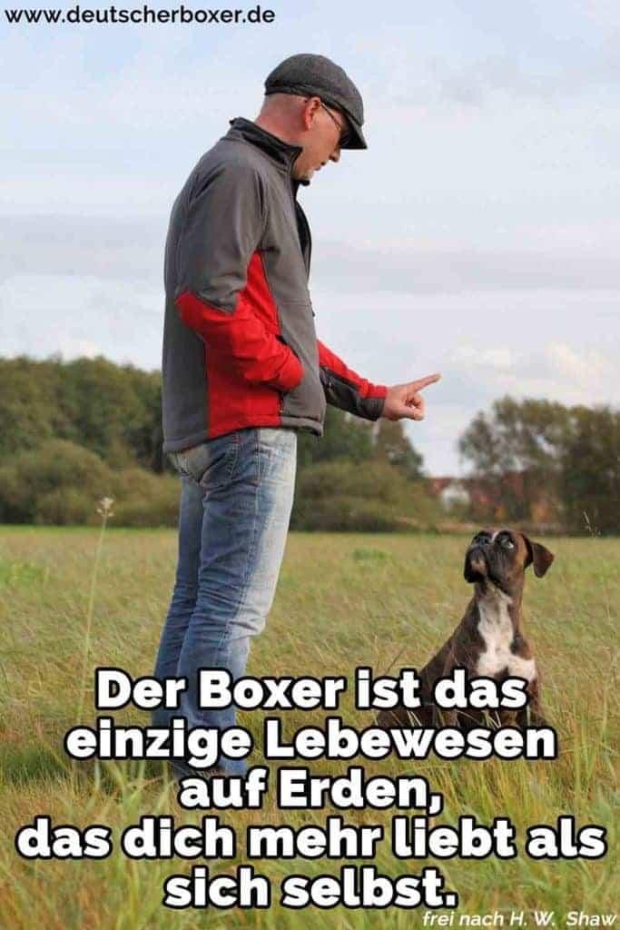 Ein Mann lehrt seinen Boxer
