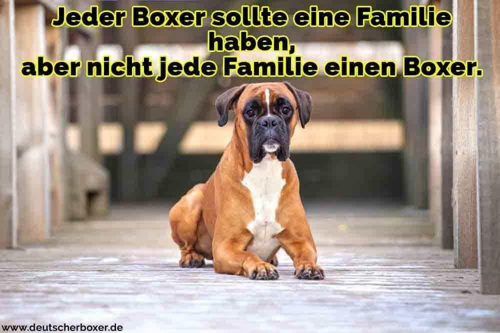 Ein Boxer auf dem Boden liegend