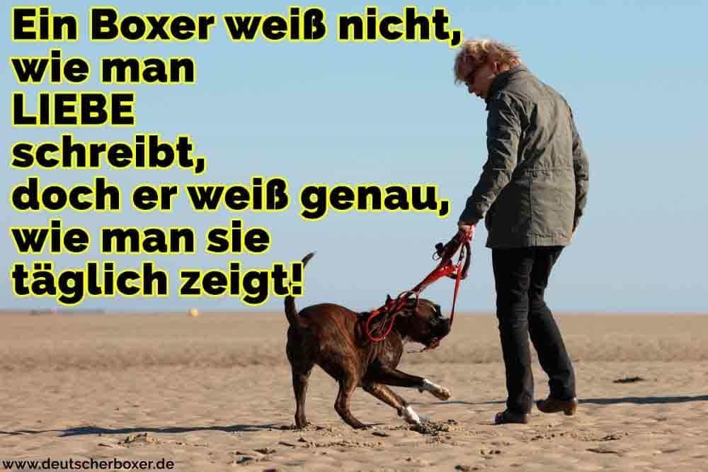 Ein Mann geht mit seinem Boxer