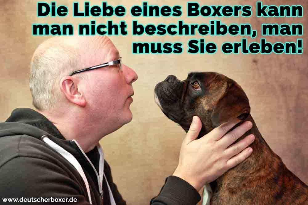 Ein Mann mit seinem Boxer sprechen