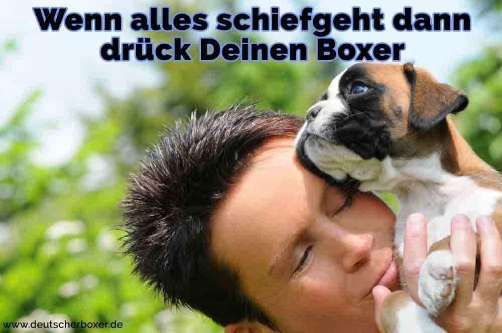 Ein Junge umarmt seine Boxer