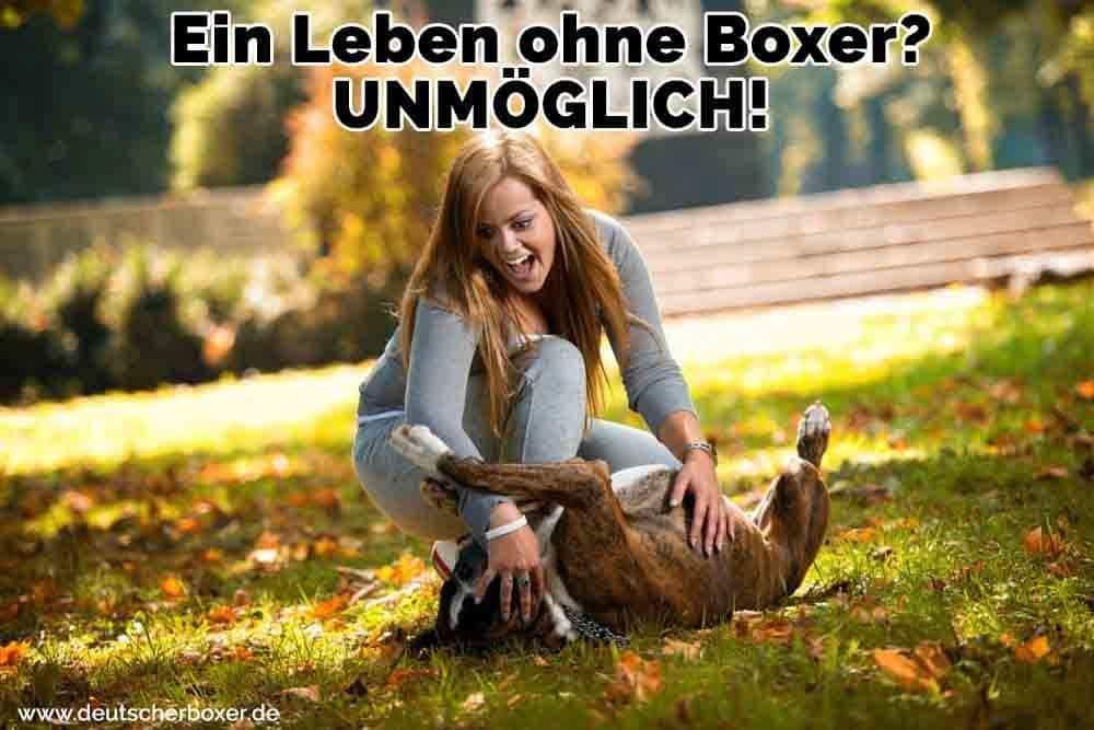 Eine Frau streichelt ihren Boxer im Park