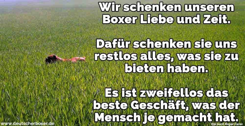 Ein Boxer im Feld