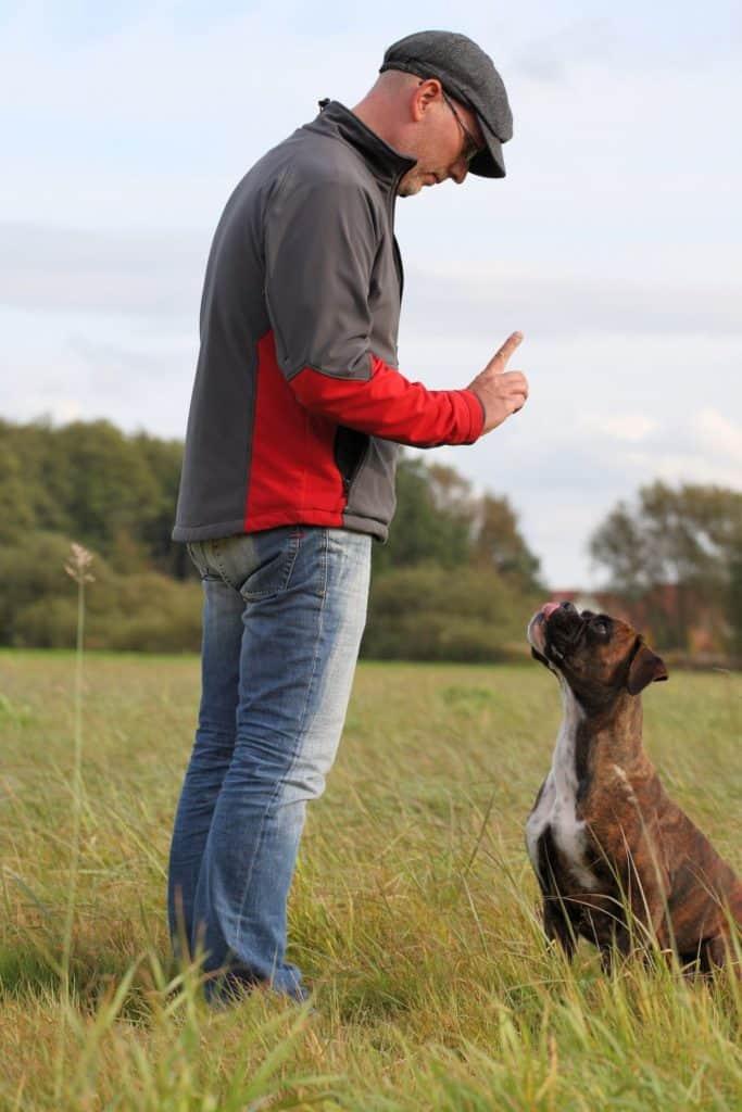 Hundetraining mit Boxer