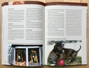 Deutscher Boxer Buch - Kapitel Welpenalter
