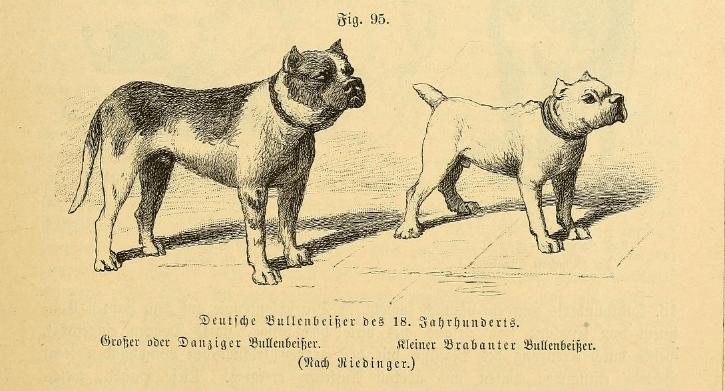 Deutsche Bullenbeißer des 18. Jahrhunderts. Großer oder Danziger Bullenbeißer. Kleiner Brabanter Bullenbeißer.