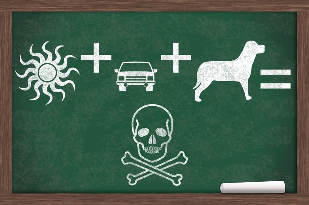 Hitze + Auto + Hund = Tod!