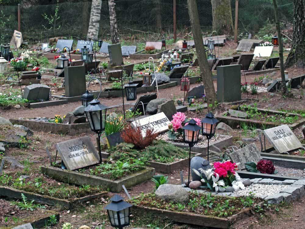 Den Boxer auf dem Tierfriedhof begraben.