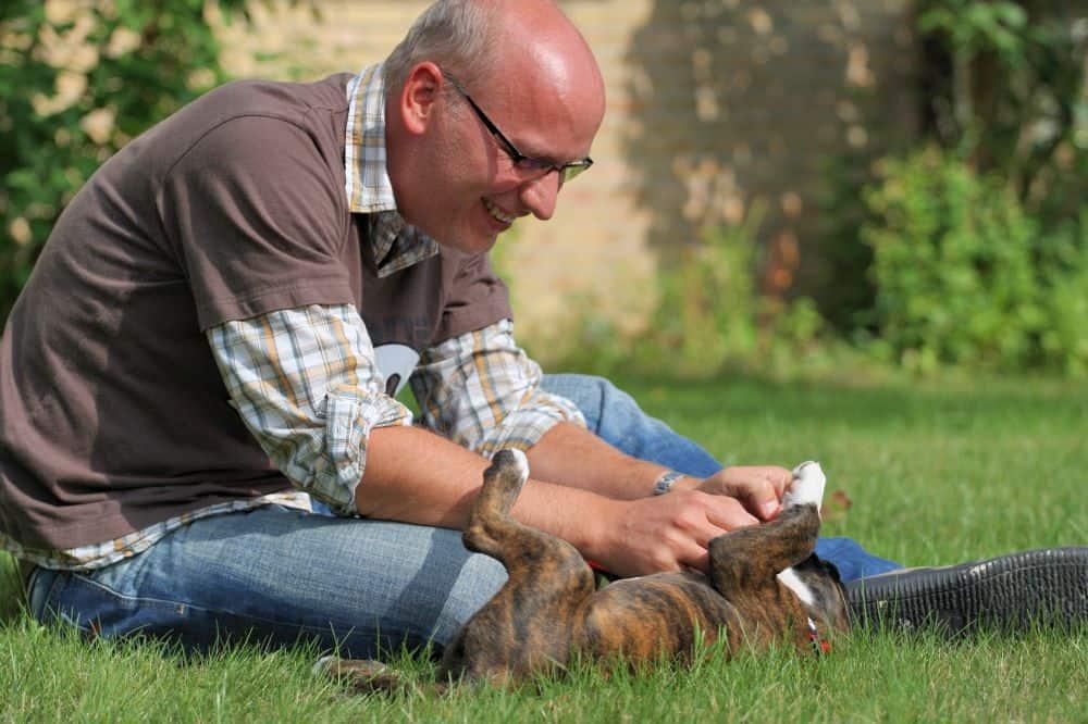 Mann spielt mit einem Boxer Welpen auf einem Rasen