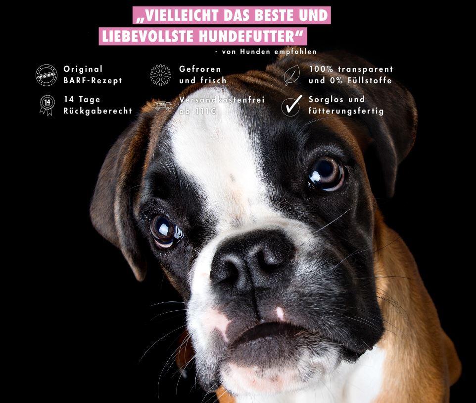 Deutscher Boxer Barfen - Einfach und mit ganz viel Liebe!